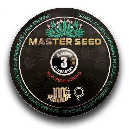 Blueberry autofem (Master-Seed)